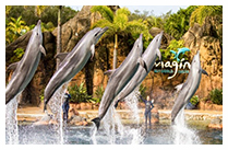 GOLD COAST – SEA WORLD