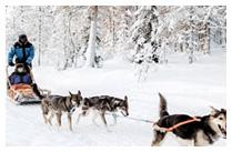 Husky Safari & The Arctic Snow Hotel
